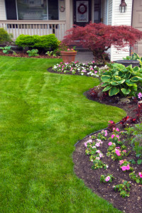 We offer lawn maintenance service on an affordable prices.